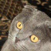 Мой кот :: LaDy Dи