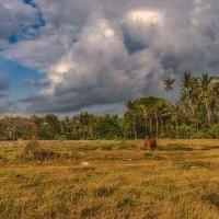 Бали,просто Бали :: Александр