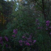Цветы в лесу :: Сергей Щеглов