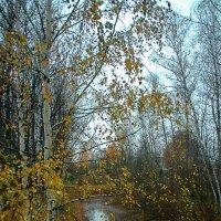 Не очень поздняя осень :: Вячеслав Крутецкий