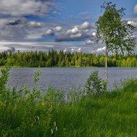 А мне милее - ЭТО! (Озеро Валдай). :: kolin marsh