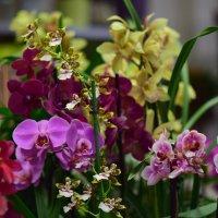 Орхидеи :: Иван Птушкин