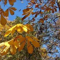 Раскрасавица осень :: Нина Корешкова