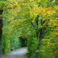 Здесь живет осень... :: Galina Dzubina