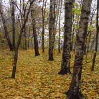 Второй Золотой Осени не будет :: Андрей Лукьянов
