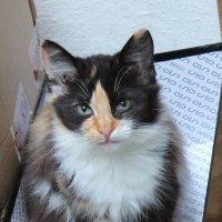 взгляд кошки :: elena манас