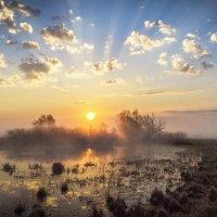 Курит облаком болото :: Сергей Михайлович