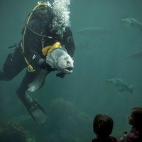 Рыба-волк :: Mikhail Bukreev