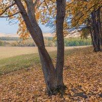 Осень выкрасила клёны.... :: Любовь Потеряхина