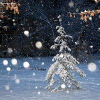 снег :: Натали Акшинцева