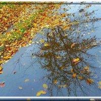 Поздняя осень. :: Чария Зоя