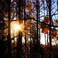 24 октября :: Loiste H.
