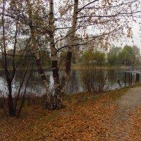 А что еще ждать от конца октября? :: Андрей Лукьянов