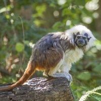 Ооочень маленький примат!! :: Татьяна Огаркова