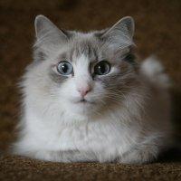 кошка Нора :: Владимир