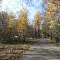 Осенний парк :: Наталья Александрова