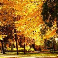 Краски осени. :: Natali