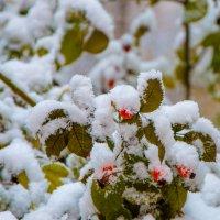 снег :: Стас Иванов
