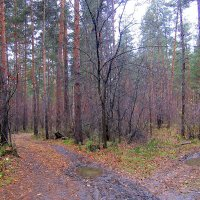 Лесной перекрёсток . :: Мила Бовкун