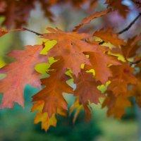 Осень :: Евгения