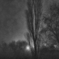 Сказка о тумане... :: Ольга Сергеева