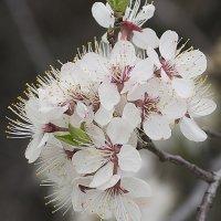 Весна :: Сергей Добрыднев