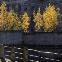 А за забором осень :: shvlad