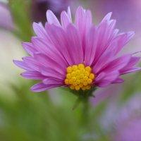 пол цветка)) :: Седа Ковтун