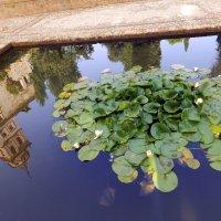 В садах Альгамбры :: Николаева Наталья