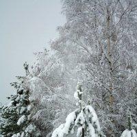 Зима берёт своё. :: Николай Масляев