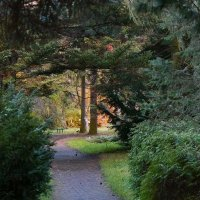 Ботанический сад :: Dmitry Swanson