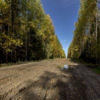 лесные дороги :: gribushko грибушко Николай
