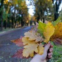 Осенний букетик :: Таня Харитонова