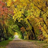 Осенний парк :: Дмитрий ВЛАСОВ