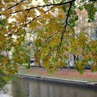 Взгляд сквозь листву.. :: Валентина Жукова