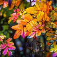 Поздняя осень... :: Рома Григорьев