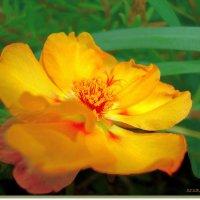 Желтая нежность :: Лидия (naum.lidiya)