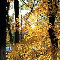 Осень :: Marina K