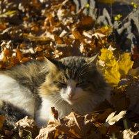 Осенняя красавица!! :: Татьяна Счастливая