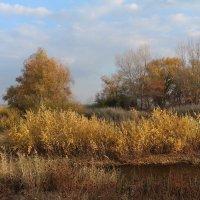 Конец октября :: Dr. Olver  ( ОлегЪ )
