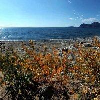 Осенний берег :: viton