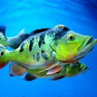 В Севастопольском аквариуме :: Елена Даньшина
