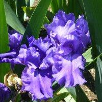 Цветы в Никитском ботаническом саду. :: Наиля