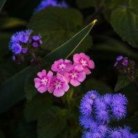 Цветы осенние :: Юрий