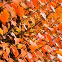 Осень :: Ростислав