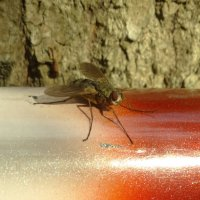 муха в октябре.... :: Михаил Жуковский