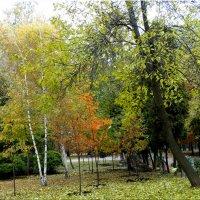 Осень в парке...3 :: Тамара (st.tamara)