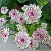 неизвестные цветы :: Елена