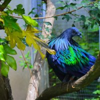 Синия птица :: Sergej