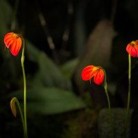 вот такие орхидеи.. :: Наталья Калягина